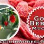 Goji Berry, Kurt Üzümü Nedir? Faydaları Nelerdir?